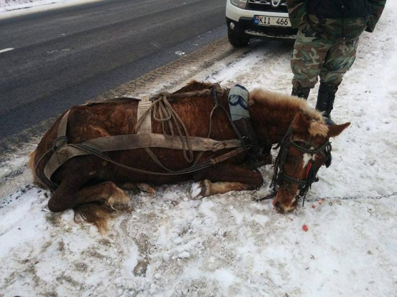 Осторожно, на дороге — лошади!  3981861